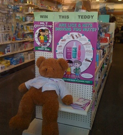 slumping prize teddy who might have nits